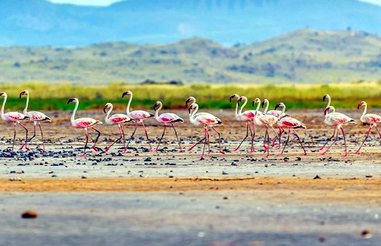 Lake Natron Game Controlled Area | Mlimani Safaris Africa