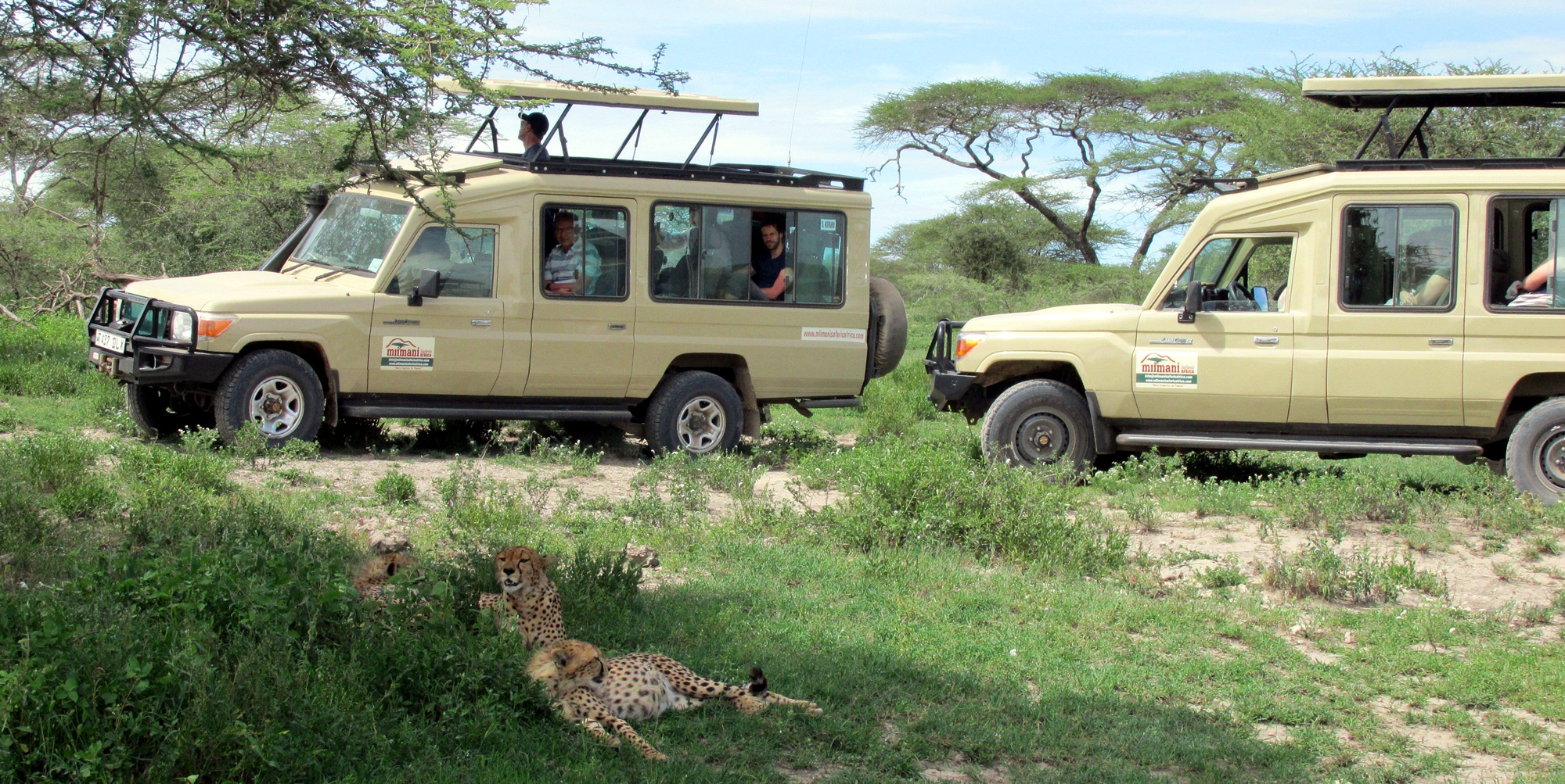 cheetah viewing serengeti
