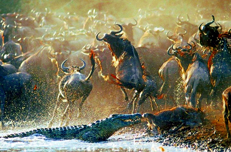 migration safari tanzania