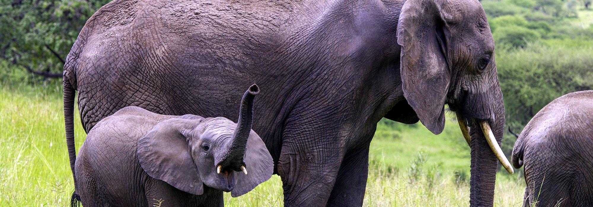 wildlife safaris attractions